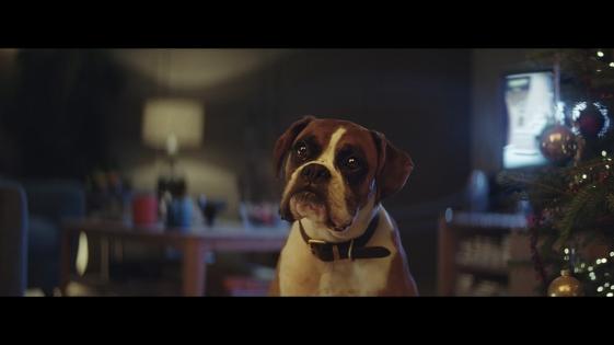 Buster-The-Boxer-John-Lewis-Christmas-Ad-07.jpg